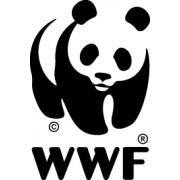 Head WWF Impact Ventures job image